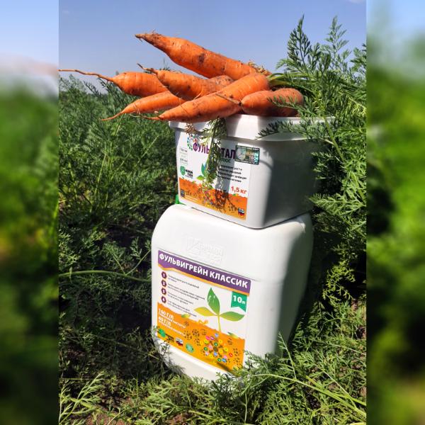 морковь и Ф...4лб